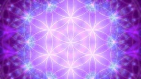 llama-violeta1-1024x576