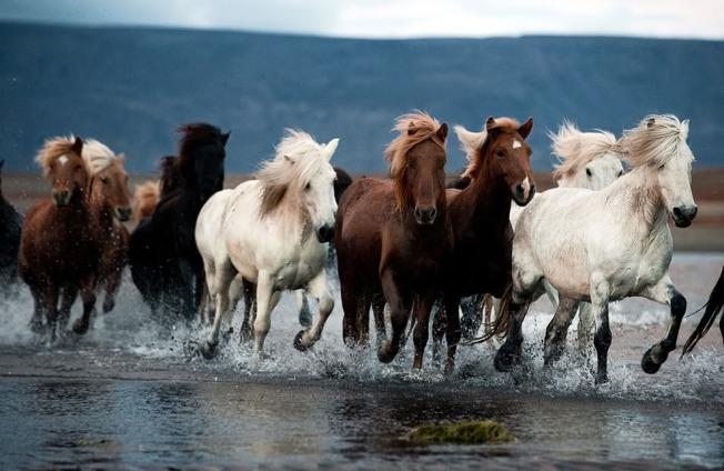 caballos-en-manada