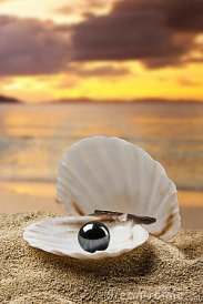 perla-negra-11754536