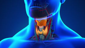 anatomy-human-larynx-medical-x-ray-scan-53725169