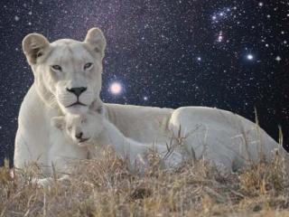 sm-star-lioness-sirius